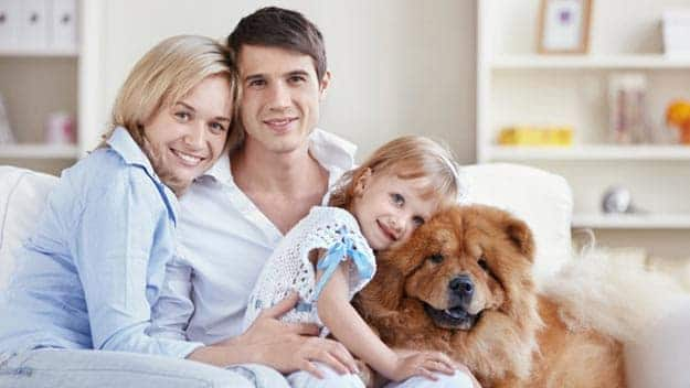 Wills & Trusts dog-young-family Direct Wills Newquay